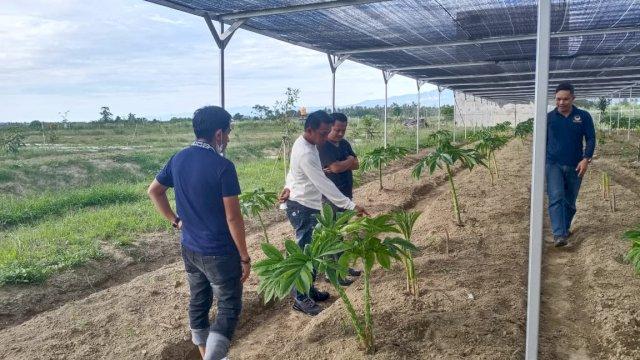 Sekretaris DPW NasDem Sulsel, Syaharuddin Alrif, meninjau lahan budidaya porang di Kecamatan Dolo, Kota Rindau, Kabupaten Sigi, Sulawesi Tengah, Jumat (2/4/2021).