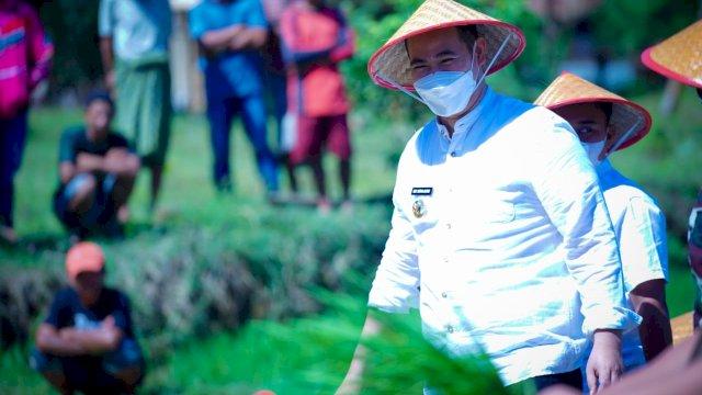 Ikut Melumpur di Sawah Bareng Petani, Bupati Pangkep Tanam Benih Padi IR 42