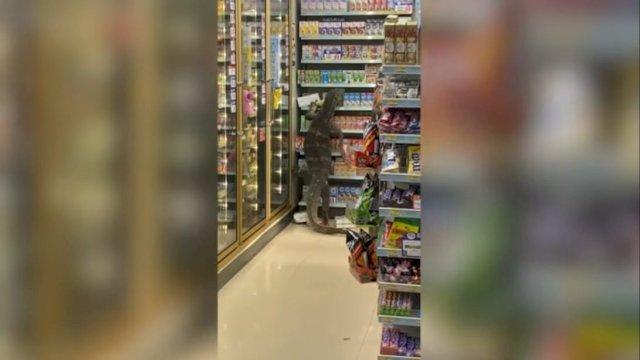 VIRAL! Biawak Raksasa Muncul Tiba-tiba di Supermarket, Lihat Endingnya