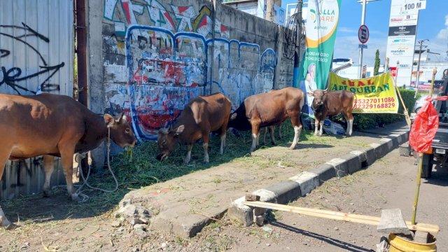 Minat Warga Berkurban Turun, Pedagang Hewan di Makassar Mengeluh