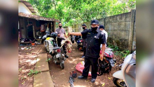 Judi Sabung Ayam Digerebek Polisi di Makassar, Pelaku Kocar-Kacir Mirip Ikut Lomba Lari Maraton