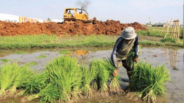 Catat! Begini Cara Mendaftar Asuransi Pertanian Agar Sawah Terlindungi Saat Bencana